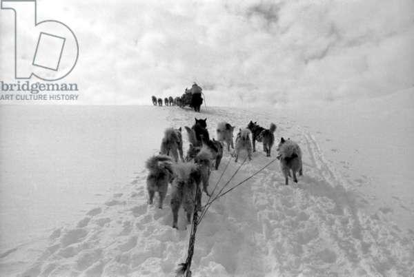 Polar expedition in Greenland, Kangerdlugssuatsiak, Autumn, 1936 (b/w photo)