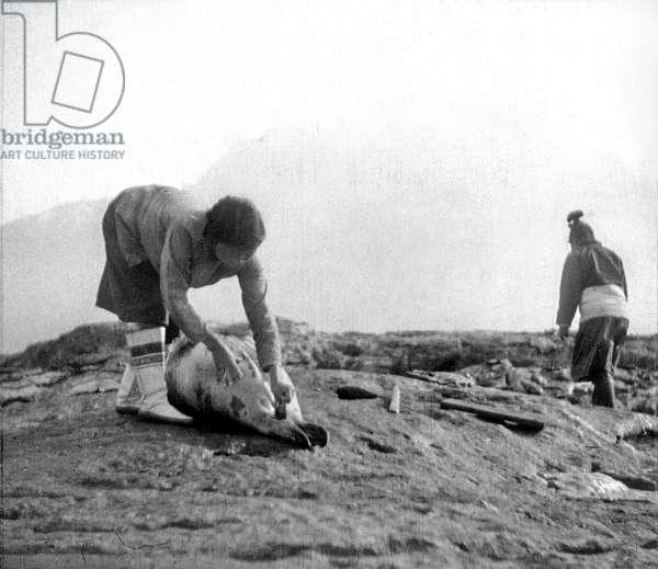 Cutting up of a seal by inuit woman, Angmassalik, Greenland, Summer, 1936 (b/w photo)