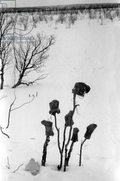 Boots and caps drying on sticks, in swedish Lapland, March, 1939 (b/w photo)