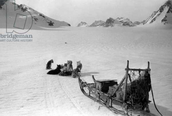Dogs sleigh, during polar expedition in Greenland, Kangerdlugssuatsiak, Winter, 1936-37 (b/w photo)