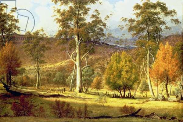 Natives in the Eucalypt Forest on Mills Plains, Patterdale Farm (the artist's home)