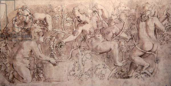 Putti Harvesting Grapes (pen & ink)
