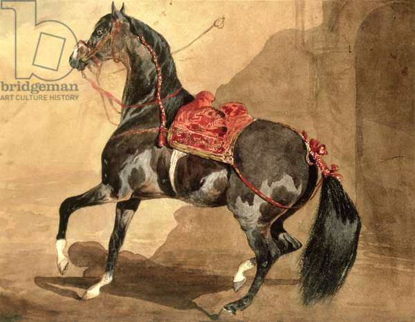 An Arabian Horse (w/c laid down on paper)