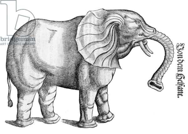 Switzerland / Africa: Drawing of an elephant by Swiss naturalist and bibliographer Conrad Gesner / Konrad Gessner, 1551