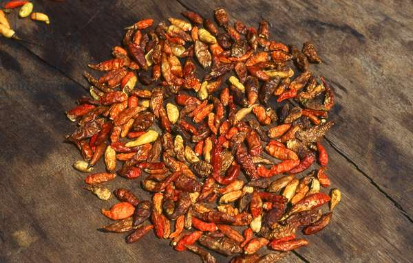 Cambodia: Red chillies drying in the sun, Phnom Penh