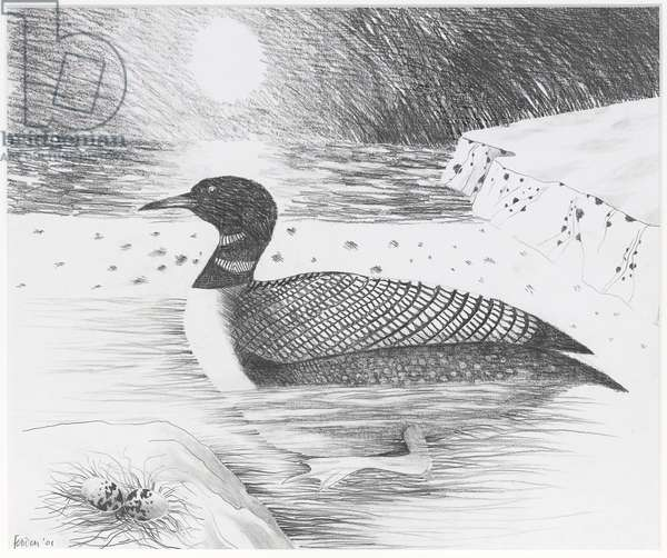 Great Northern Diver, 2001 (pencil on paper)