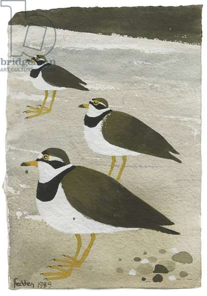 Ringed Plovers, 1989 (gouache on paper)