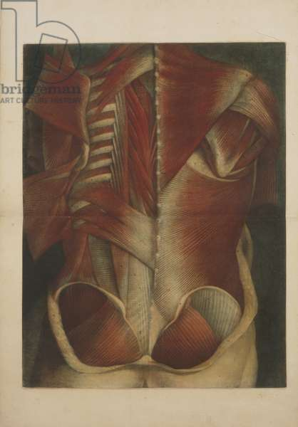Muscles of the Back, 1746 (colour mezzotint)