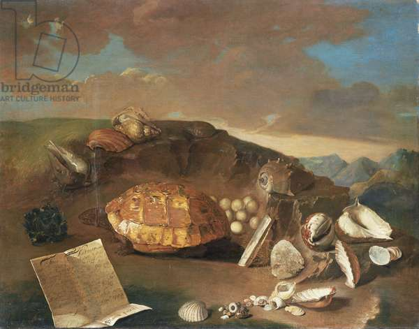 Still Life with a Tortoise, 1743 (oil on canvas)
