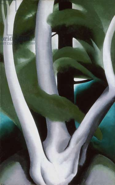 Birch and Pine Tree No. 1, 1925 (oil on canvas)