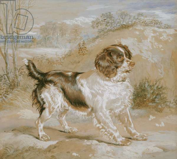 A Spaniel, 1822 (opaque w/c over graphite on buff wove paper)