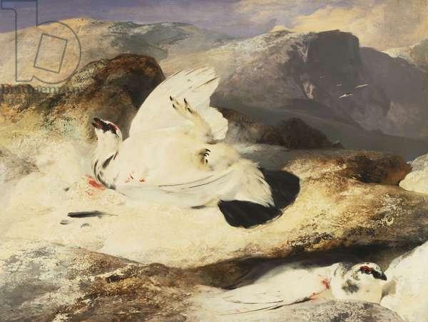 Ptarmigan in a Landscape, 1833 (oil on panel)