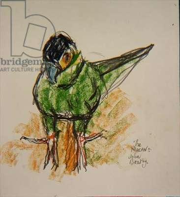 The Macaw (II)