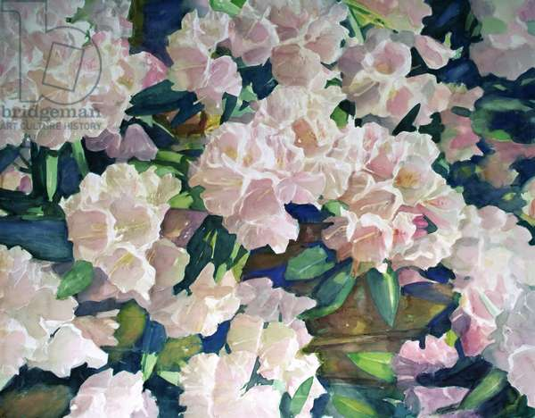 Poppies, 1991 (w/c on paper)