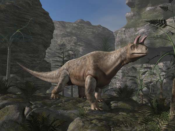 Shringasaurus: Shringasaurus indicus is an Archosaurian reptile that lived in the middle of the Triassic (230 million years). It was about 4 metres long. Discovered in India in 2017. Shringasaurus is a genus of allokotosaurian archosauromorph from the Middle Triassic (Anisian) of India. It was up to 4 meters in length
