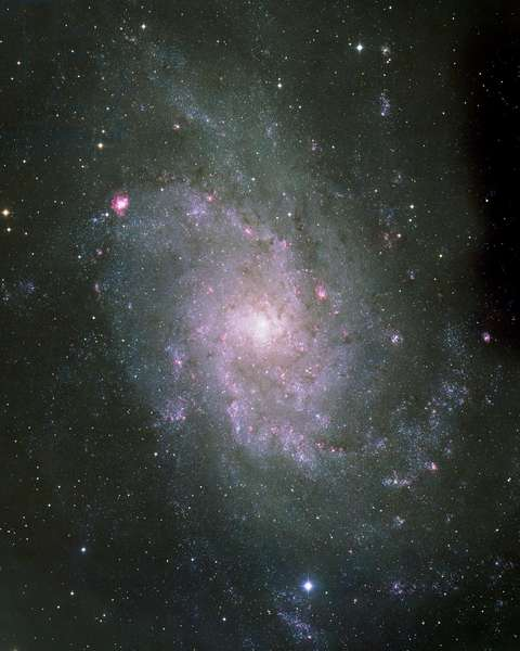 Spiral Galaxy M33 in the Triangle - Spiral galaxy M33 in Triangulum - The Galaxy of the Triangle (M33, NGC598) is located about 2 million years ago - light from Earth. It belongs to the local group, just like our galaxy or Andromede galaxy. In red, the star-forming regions appear, especially at the top left NGC 604 one of the largest and most active star-forming regions. It extends over 150 years of light. Image obtained from the Isaac Newton telescope of La Palma. M33 is a large, almost face - on spiral galaxy about 2.5 million light years distant in the northern constellation of Triangulum. It is a member of the 'Local Group' of galaxies, which is dominated by the Milky Way and M31. Like M31, M33 is approaching the Milky Way at a velocity of about 180km/s. Although the total light M33 galaxy is that of a star of magnitude 5.3, its large diameter makes it hard to see. However, despite its low surface brightness, this galaxy was among the first to be identified as a 'spiral nebula' by Lord Rosse in the 1840s. In the upper left (north - east) part of this wide field view is the reddish nebula NGC 604, one of the biggest and most active nearby starforming regions. It is about 150 light years in diameter, eqivalent to the distance from the Sun to the Orion nebula