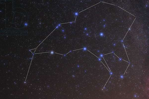 Kiwi Asterism - The Kiwi asterism - Kiwi is an asterism unique to New Zealand. These stars belong to the constellations of Centaur and Wolf. The Kiwi is a New Zealand asterism and these stars are located in Centaurus and Lupus