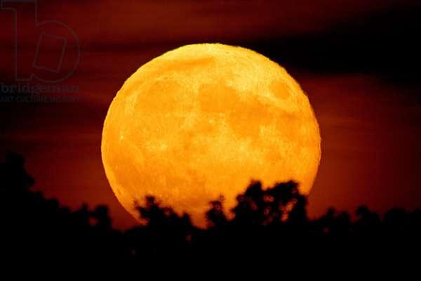 Moonrise Full Moon - Moonrise - Harvest Moon September 18, 2005