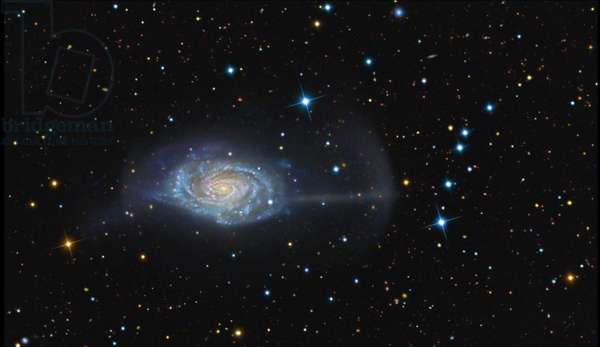 Spiral galaxy NGC 4651 in Berenice's Hair - Spiral galaxy NGC 4651 in Coma Berenices - The galaxy NGC 4651 (Arp 189) is located about 50 million years away - light from Earth. The Umbrella Galaxy (NGC 4651 or Arp 189) exhibits a jet like spear that's strikingly coherent and narrow. The structure was previously reported by Boris Vorontsov Velyaminov in 1959 but never interpreted as a stellar tidal stream. This deep image additionally shows a spectacular crescent shaped shell surrounding the east side of the star system that corresponds to the apocenter of the dwarf galaxy. Interestingly, a possible second arc on the western side of the galaxy can also be seen in this image. This feature is less obvious because it's partially hidden by the galaxy's disk and suggests we are observing a moderately inclined structure projected into the halo of NGC 4651. This image was produced by combining an hour of exposure through the Isaac Newton Telescope, located on the Spanish island of La Palma, with over 13 hours of imagery obtained with the 0.5 meter telescope at the Blackbird Observatory in New Mexico (USA). This galaxy is located at about 50 million light years away