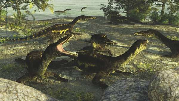 Nothosaurus - The genus Nothosaurus, meaning mixed lezard, belongs to the family Nothosaurides (Sauropterygia), which lived in the Triassic from -240 to -210 million years. Nothosaurus is an extinct genus of sauropterygian reptile from the Triassic period (240-210 million years ago). Fossil being distributed from North Africa, Europe and China. Nothosaurus was a semi-oceanic animal which probably had a lifestyle similar to that of seals. It was up to 4 meters (13 ft) long