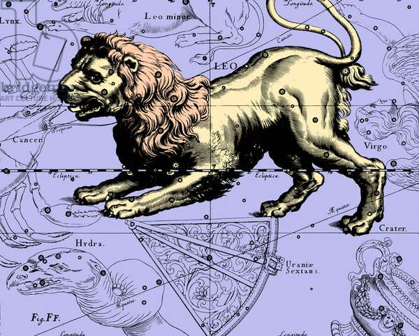 "Lion Constellation - Constellation of Leo - The constellation of Lion, extracted from the Uranographia of Hevelius. Recolorised image. Map showing the constellation of Leo with its mythological form from """" Uranographia"""" star atlas by Hevelius (1690). Recolored Image"