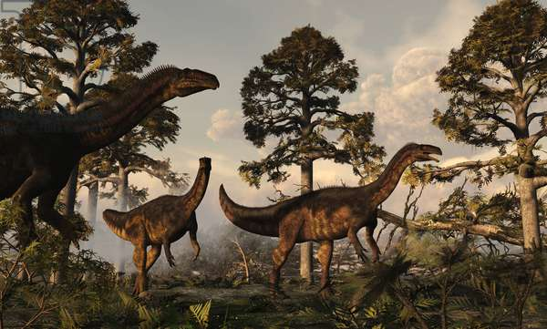 Plateosaurus - Plateosaur is a herbivorous prosauropod in the plateosaurid family. It could measure up to seven metres and weigh four tons. He lived in the Upper Triassic about 220 million years ago. Plateosaurus is a genus of plateosaurid prosauropod dinosaur that lived during the Late Triassic period, around 216 to 199 million years ago