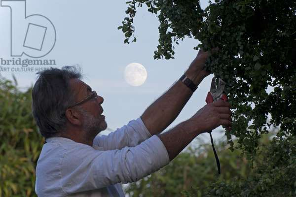 Gardening by the Moon - Gardening by the Moon - A gardener cuts a tree using a secator with the Full Moon in the background