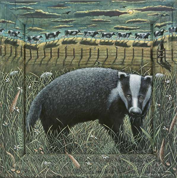 BADGER AND COWS