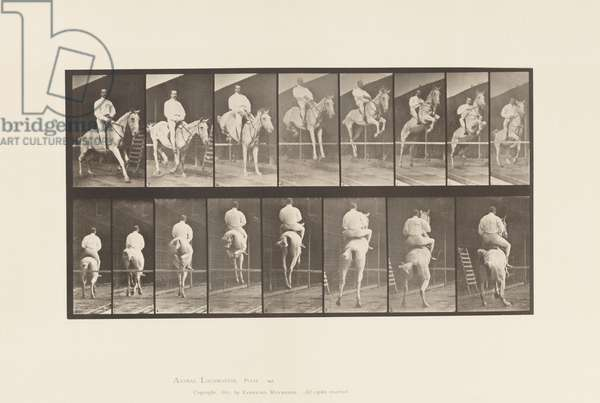 Plate 645.Jumping a Hurdle; Saddle; Clearing and Landing, 1885 (collotype on paper)