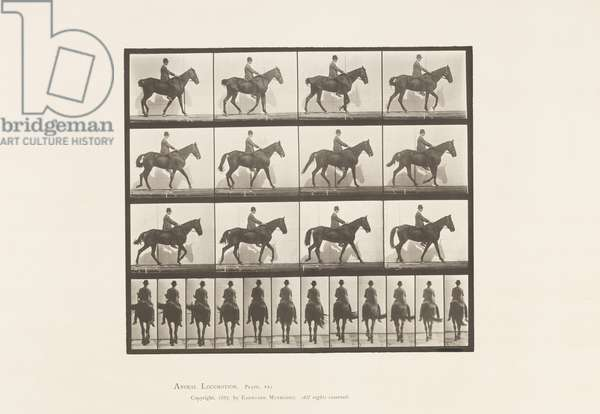 Plate 655. Walking; Saddle; Spavin, Right Hind Leg; Horse, 1885 (collotype on paper)