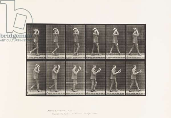Plate 44. Walking Taking Off Hat, 1885 (collotype on paper)