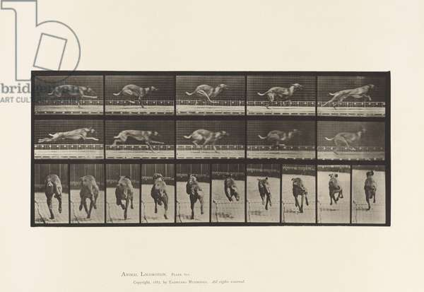 Plate 708. Dog; Galloping; Brown Racing Hound, 1885 (collotype on paper)