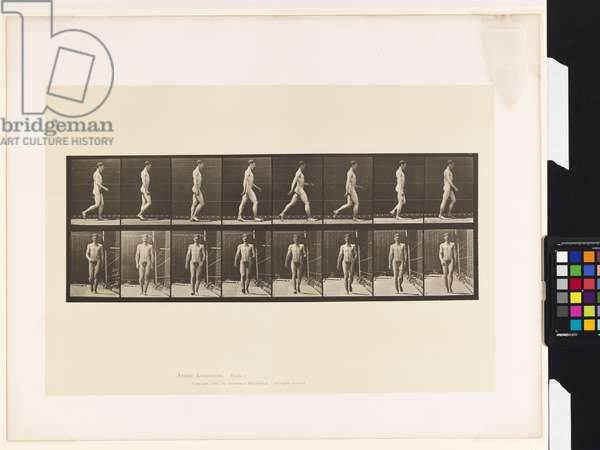 Plate 5.Walking, 1885 (collotype on paper)