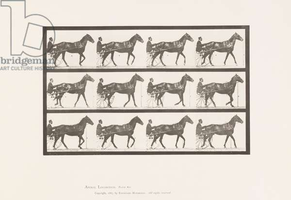 Plate 605. Trotting; Sulky; Bay Horse, Reuben, 1885 (collotype on paper)
