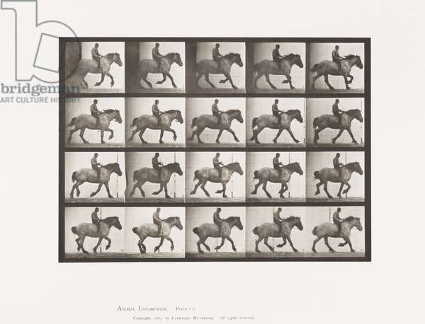 Plate 615. Canter: Bareback; Dark-Gray Belgian Horse Hansel, 1885 (collotype on paper)