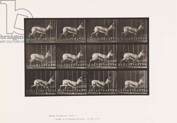 Plate 697. Antelope; Trotting, 1885 (collotype on paper)