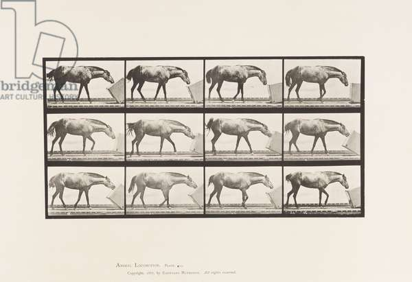 Plate 657. Rolling a Box; Pony, Lotta, 1885 (collotype on paper)