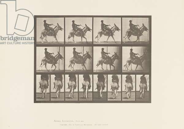 Plate 668. Ass; Ambling; Saddle; A Boy Riding, Zoo, 1885 (collotype on paper)