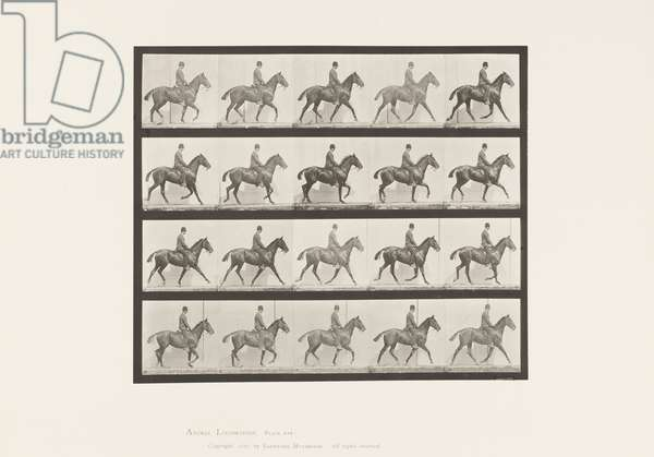 Plate 598. Trotting; Saddle Bay Horse Daisy, 1885 (collotype on paper)