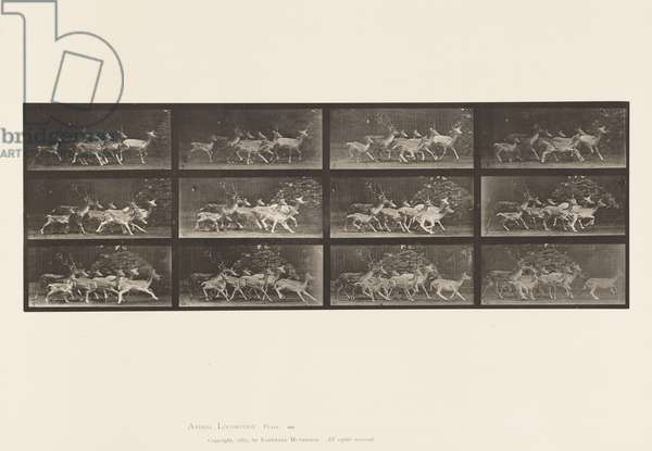 Plate 690. Fallow Deer; Buck and Group of Does; Various Movements, 1885 (collotype on paper)