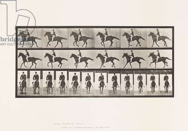 Plate 618. Canter; Sudde; Brown Horse Middleton, 1885 (collotype on paper)