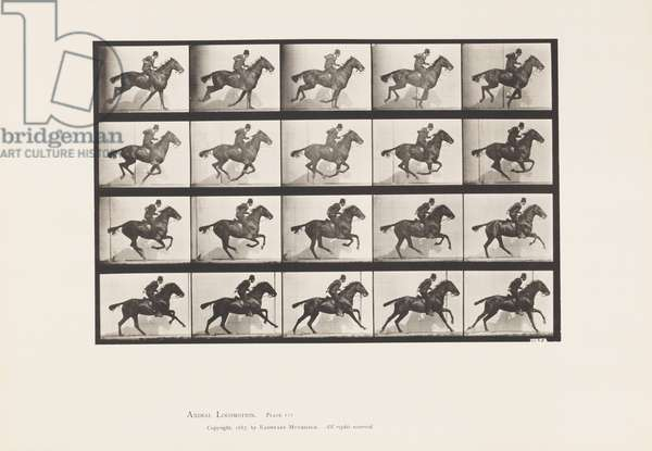 Plate 628. Gallop; Bay Horse Daisy, 1885 (collotype on paper)