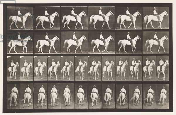 Plate 579. Walking; Saddle; White Horse Elberon, 1885 (collotype on paper)