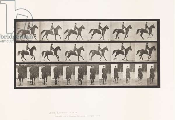 Plate 619. Canter; Saddle; Brown Horse Middleton, 1885 (collotype on paper)