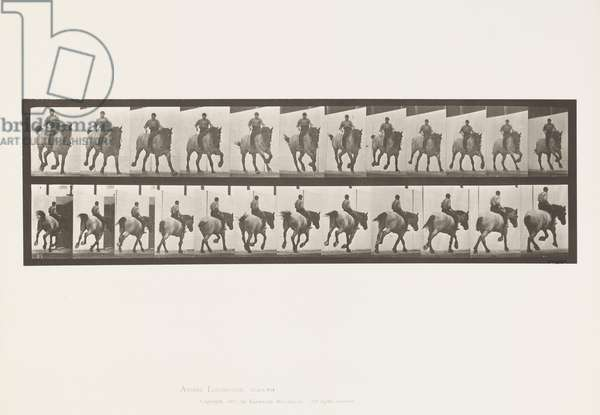 Plate 629. Gallop; Bareback; Belgian Draught Horse Hansel, 1885 (collotype on paper)