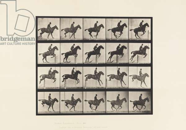 Plate 639. Jumping a Hurdle; Saddle; Bay Horse Daisy, 1885 (collotype on paper)