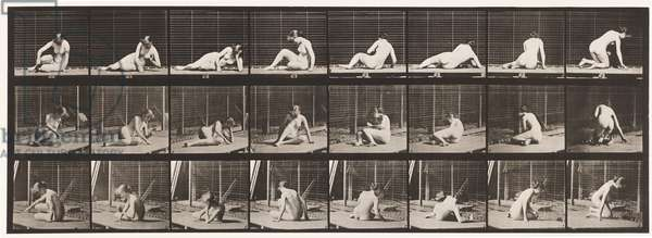 Plate 266. Turning and Changing Position While Still on the Ground, 1872-1885 (collotype on paper)
