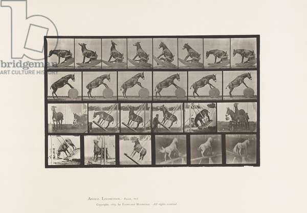 Plate 660. Mule; Miscellaneous Performances Denver, 1885 (collotype on paper)