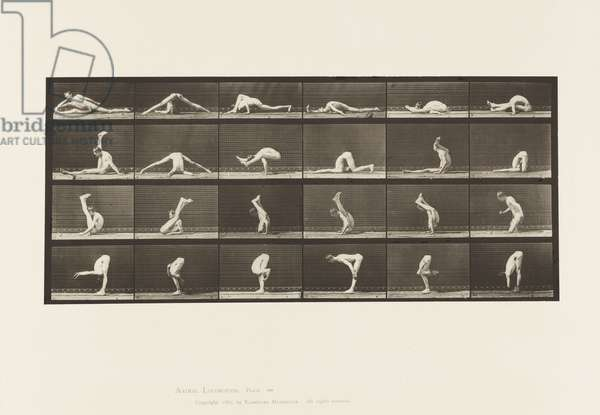 Plate 510. Contortions on the Ground, 1872-85 (collotype on paper)