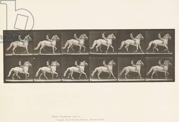 Plate 590. Ambling (single foot); Bareback; Rider 106, Nude, 1885 (collotype on paper)